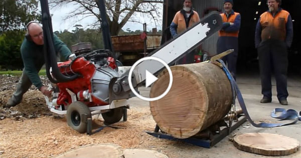 V8 Powered Chainsaw 253 CI Holden Hardwood 4
