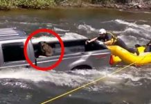 Dog Stuck In The Truck Bed Rescued 1