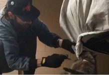 These Guys Saves RaccoonTangled in His Car Tarp 1