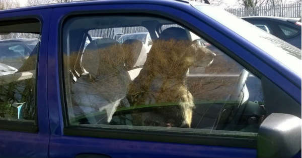 New Law - Its A Felony To Leave A Pet In Your Hot Car 1